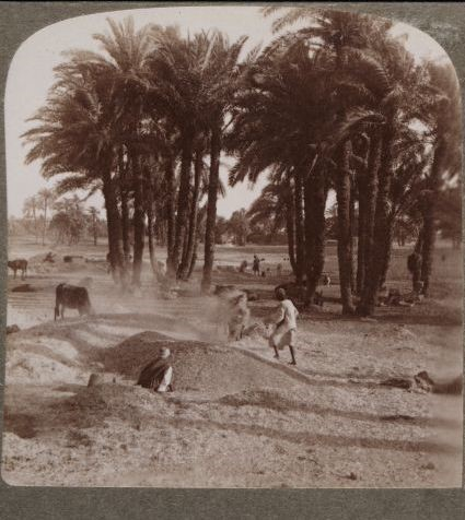Travelers in the Middle East Archive (TIMEA) 5602: The Winnowing of the grain after the threshing, Stereograh 1904. Aus der Sammlung von Dr. Paula Sanders, Rice University - Lizenz: gemeinfrei.
